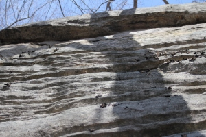 Detail of the stable wall we climbed.