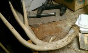 Select the antler you want to use and remove excess tines.
