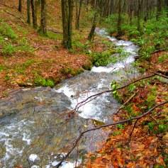 Meandering mountain creek.