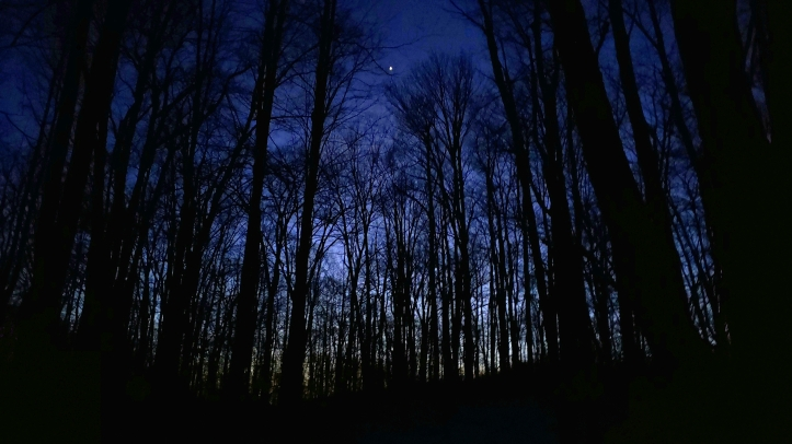 A single star in blue night with silhouette trees