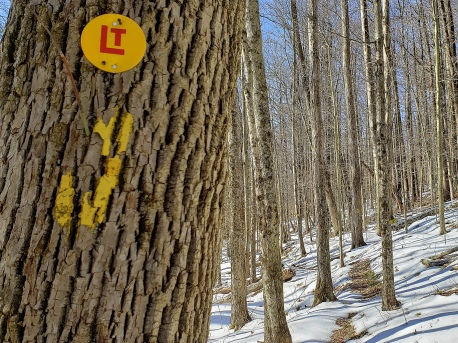 Loyalsock Trail markers. On the path.